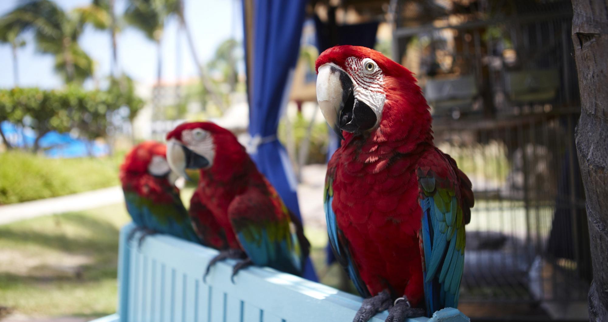 Aruba_oranjestad_destination_hotels-caribbean_eco_dms