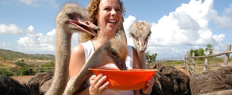 ostrich farm activity aruba